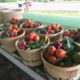Is a CSA farm share right for your family?