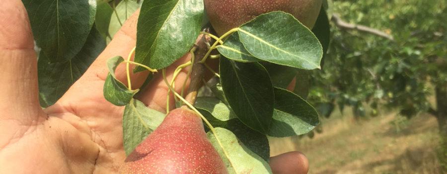 Rumar Farm Pursuing Biodynamic Certification
