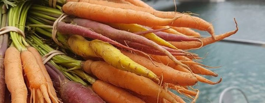 Tips to get the most from your CSA
