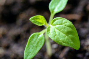 Rumar Farm Plant Sale Starts May 1st